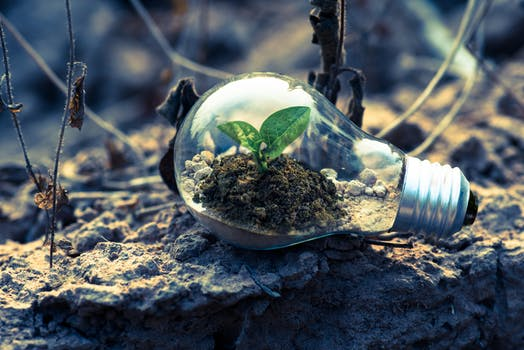 Light bulb lying on earth with soil and a tiny plant inside the bulb to represent energy saving lighting.